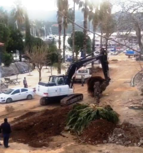 meydandaki ağaçların sökülmesine tepki var.png