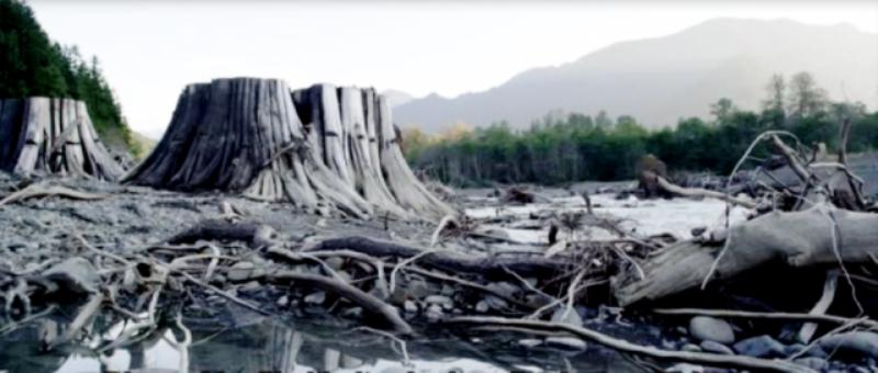 Yıkılan barajların altından çıkan kesilmiş  ormanlar.png