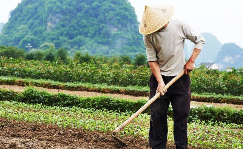 Dünyanın önde gelen fasulye üreticilerinden biri olan Çin'den kuru fasulye satın alıyoruz.jpg
