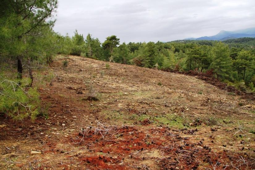 ormandan açılan arazilerden biri.JPG