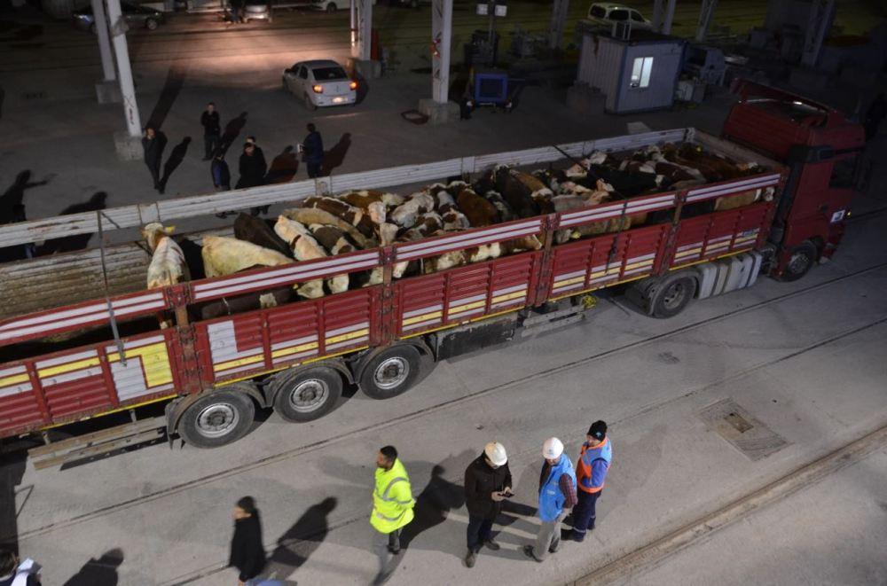 romanya'dan ithal edilen sığırlar öldü.jpg