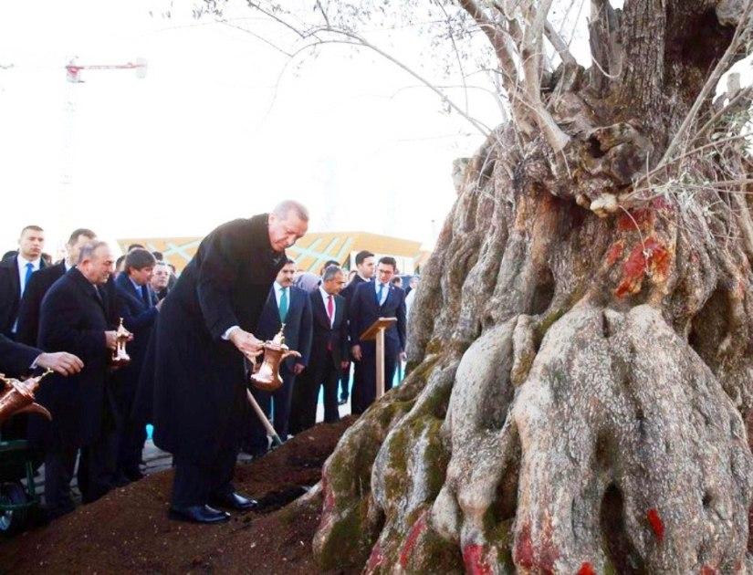 Erdoğan EXPO alanına diktiği ağaca ibrikle can suyu verdi.jpg