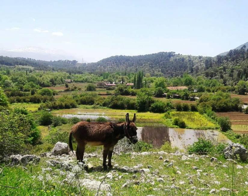 köylülerin tarlalarında da su çıkmaya başladı.jpg
