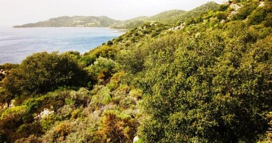 Sit alanı olan arazi Çukurbağ Yarımadasının yapılaşmadan korunmuş bölümünde yer alıyor.JPG