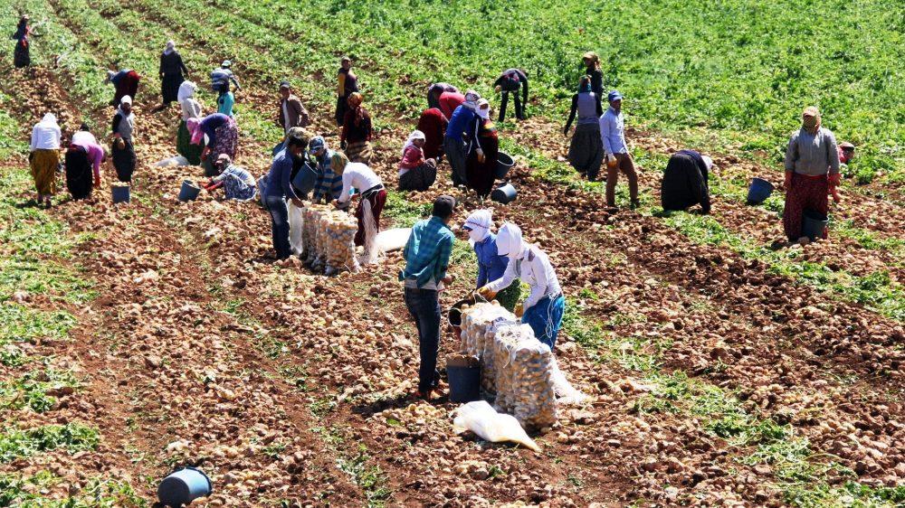 son 12 yılda 600 bin çiftçi toprağını terk etti.jpg