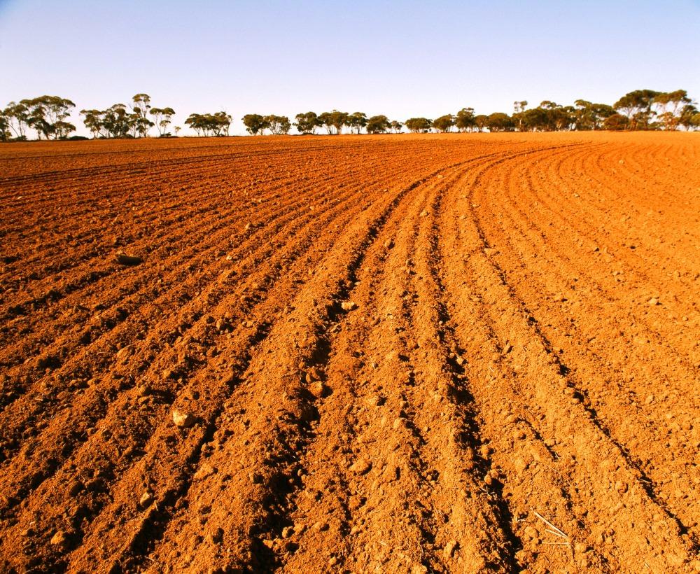 Toprak  yaşamın ve insan beslenmesinin temel  kaynağı.jpg