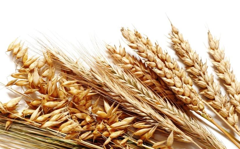 buğday2.jpg