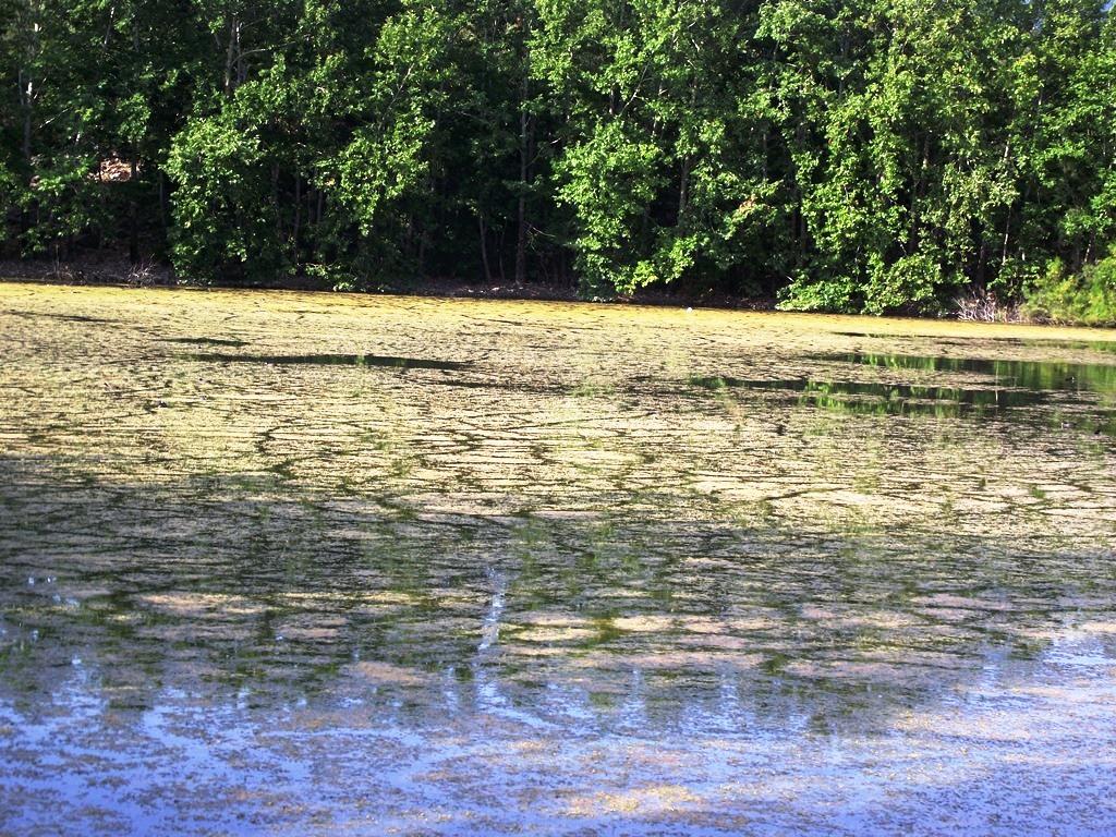 kovada gölü kirlilikle boğuşuyor.JPG