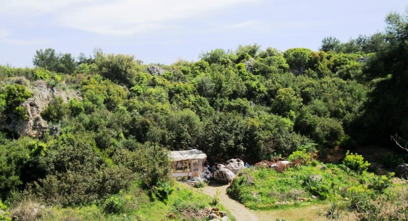 ağaç kıyımı yapılan arazinin büyük bölümünün davaklık olduğu öğrenildi.JPG