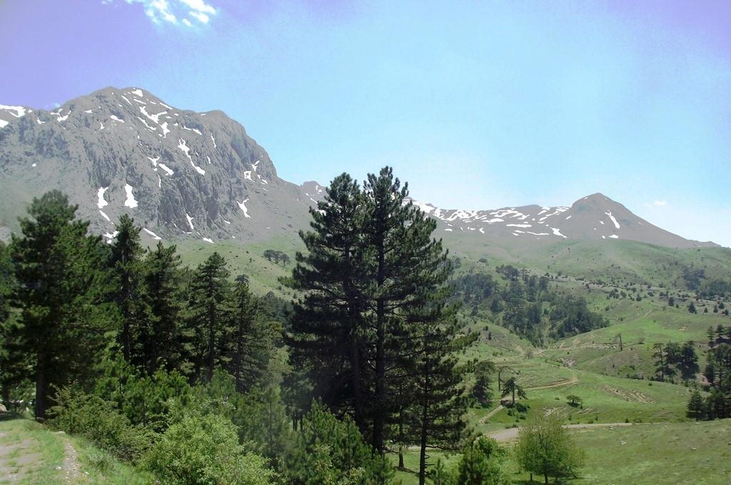 Dedegöl Dağı yabani gül türleri için önemli bir yayılış alanı.JPG