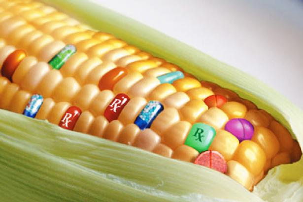geneticky-modifikovane-plodiny-01.png