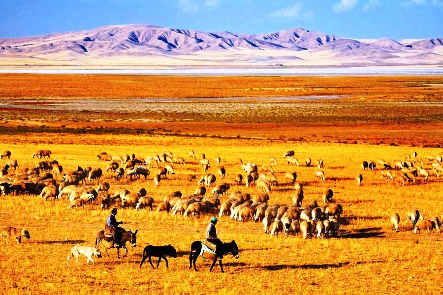 Tuzgölü kıyısında koyun çobanları. Fot, Cüneyt Oğuztüzün-Atlas.jpg