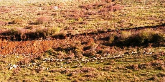 Ekim 2017'de Çakıl Köyü merasında koyunlar dolaşıyordu.jpg