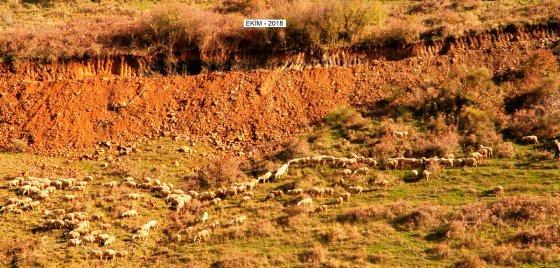 Ekim 2018'de taş ocağı için bölgede açılmaya başlayan yolun ardından mera alanı yok edildi.jpg